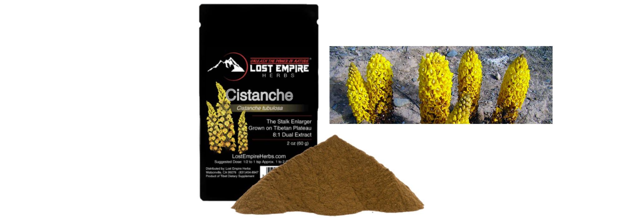 Cistanche +plant